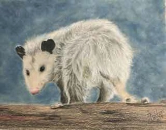 """Lonesome Opossum"" - Colored Pencil and Pastel"