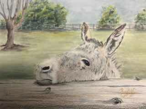 """Tired Donkey"" - Colored Pencil and Pastel"