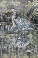 Heron Quiet Reflection